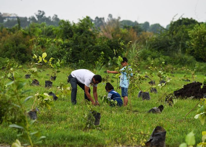 วิจัยชี้ ปลูกป่าอาจทำลายระบบนิเวศ-ปล่อยก๊าซคาร์บอนมากขึ้น