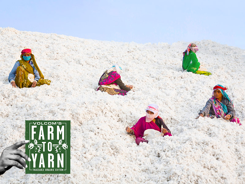 women sitting in cotton