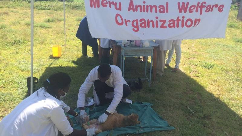 Stay and Neuter Clinic
