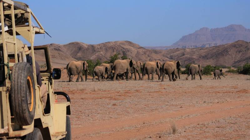 Elephant Conservation Supporter