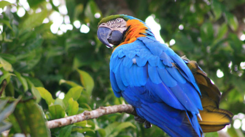 Parrots and other exotic animal