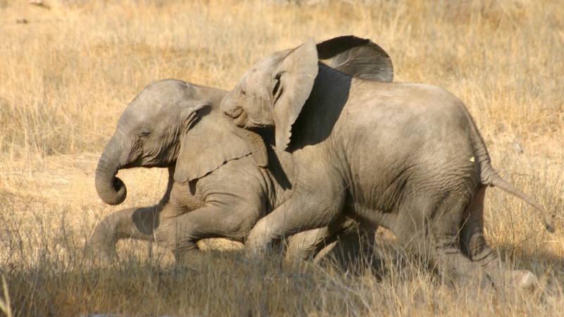Family Elephant Volunteering