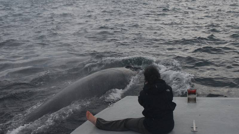 Volunteer with whales