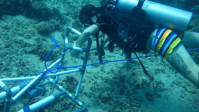 Setting the Underwater Video system