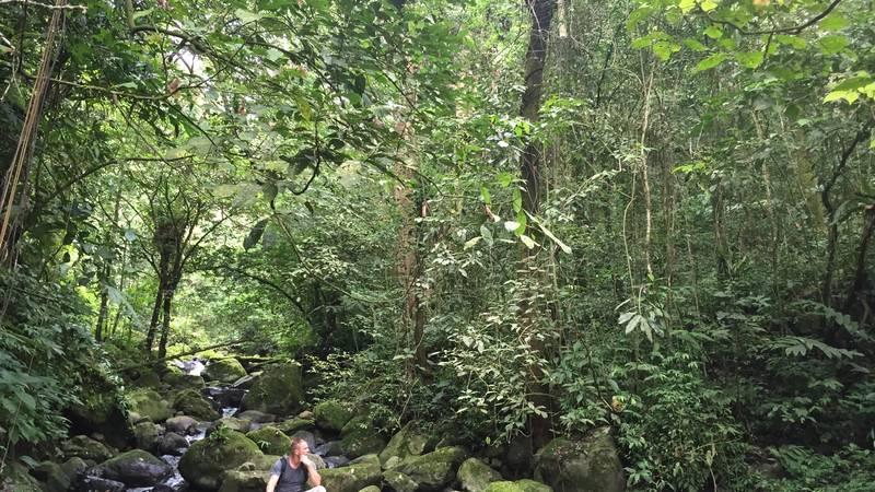 Rainforest day trip