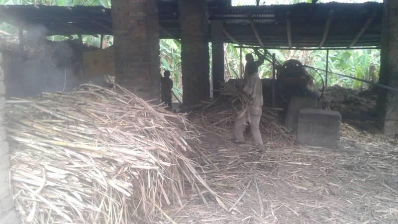 Getting ready to process sugar cane into panela
