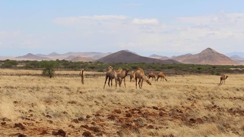 Turkana Country Side