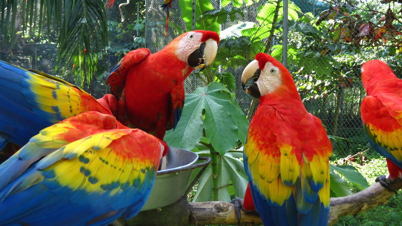 Macaw & Animal Reserve Supporter