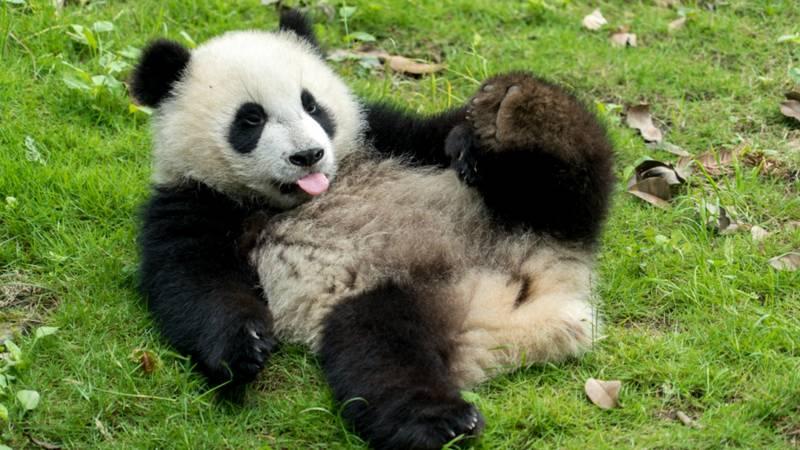 Giant Panda Center