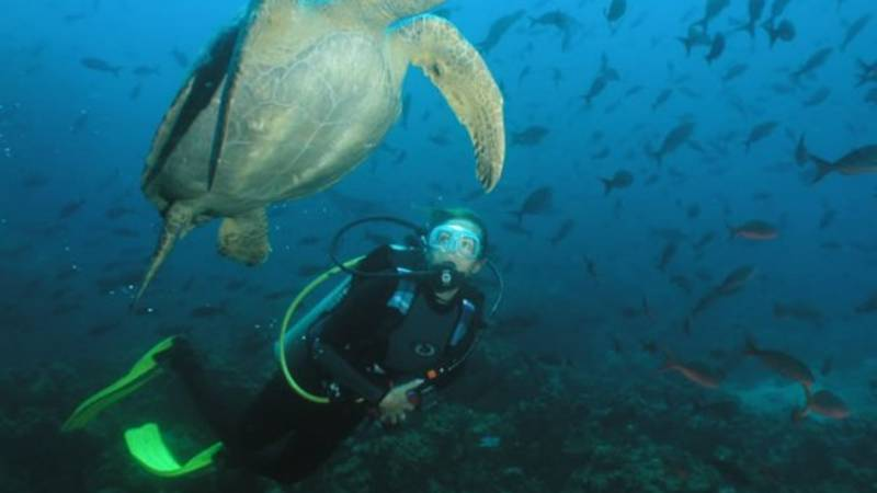 Underwater world of the Galapagos