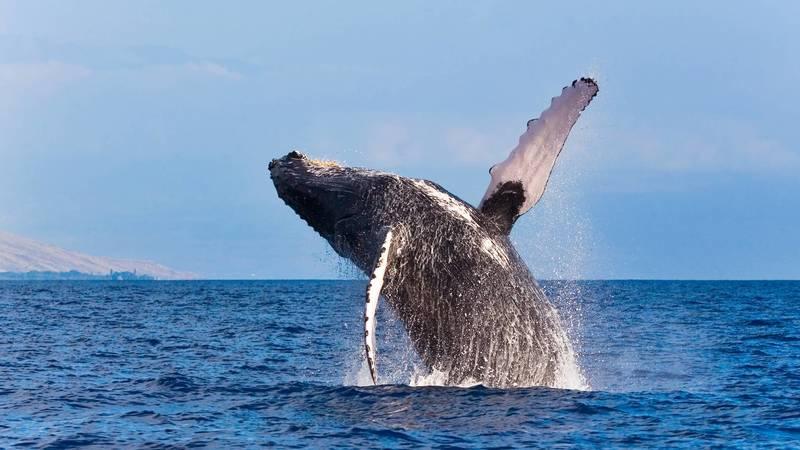 Whale Conservation Assistant