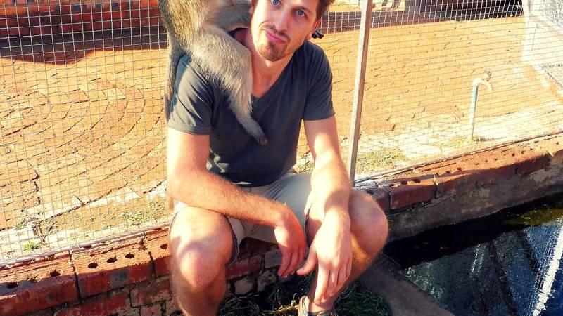 Velvet monkey interaction