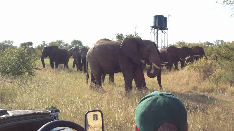 Big 5 Wildlife Protection