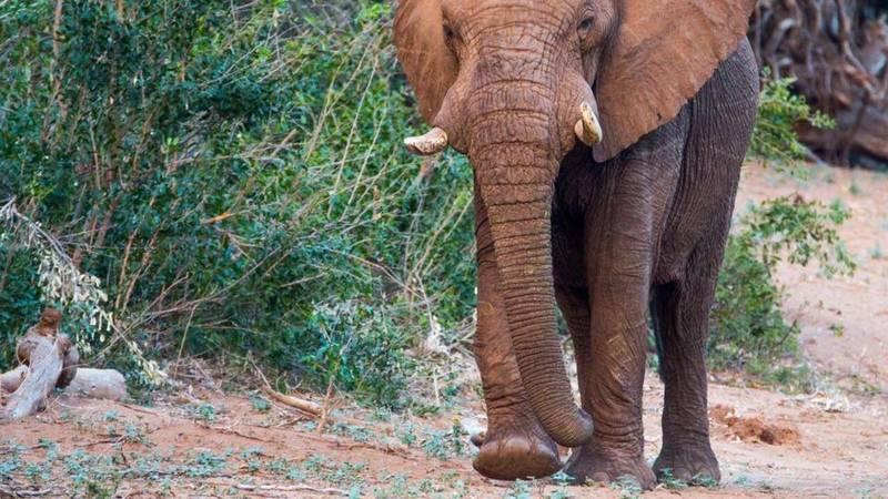 Elephants often visit C.A.R.E.