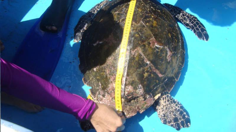 Measure Turtles