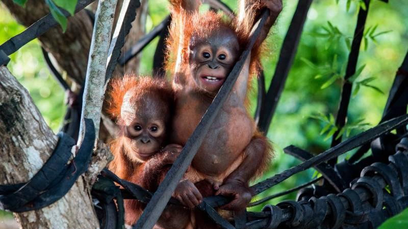 IAR Orangutan Sanctuary