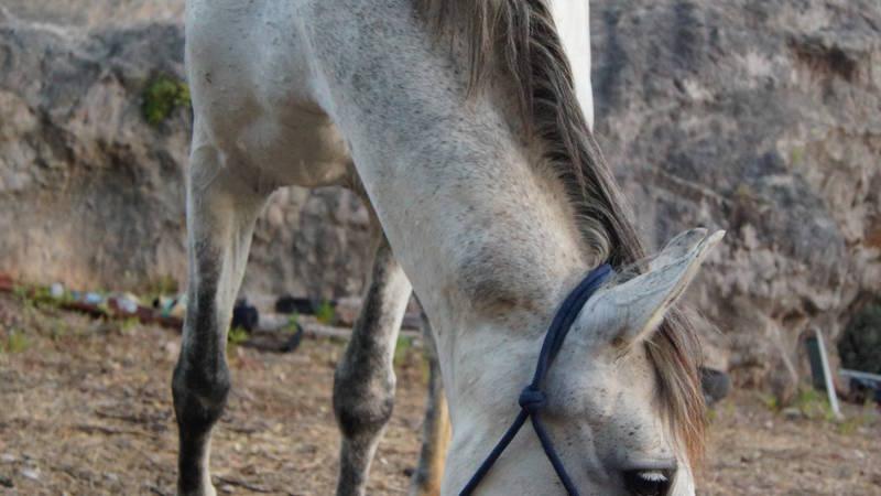 Horse Sanctuary Student
