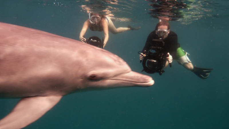 Wild Dolphin and Humans