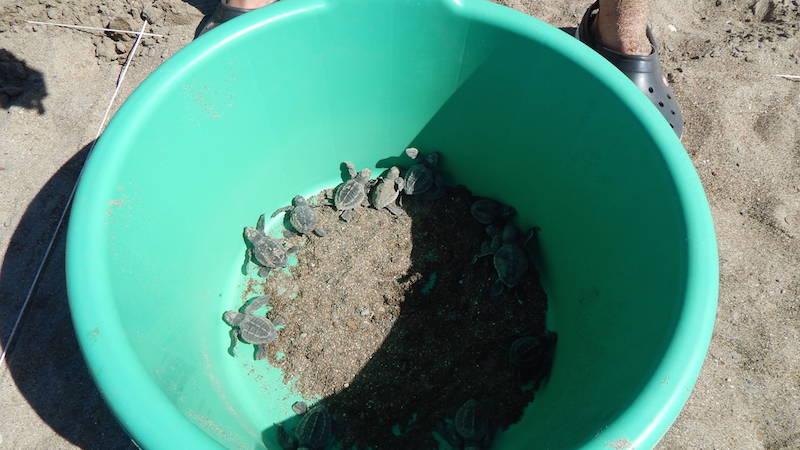 Save Turtles In Buena Vista