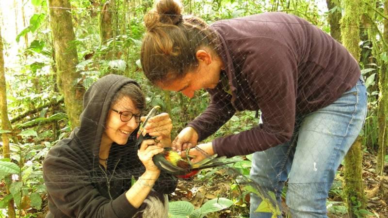 Bird Monitoring & Research