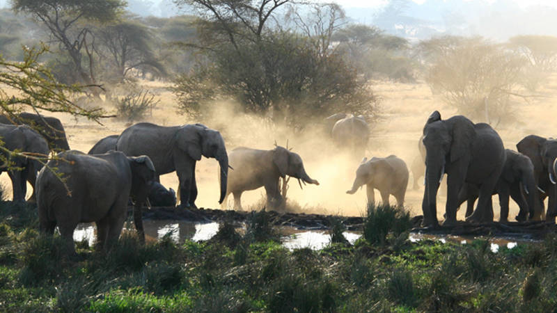 Conservation work and game drives