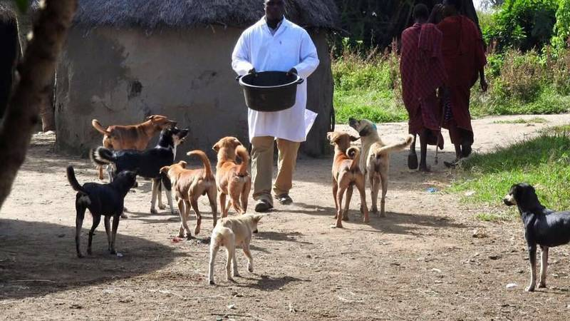 Providing for the dogs in rural areas