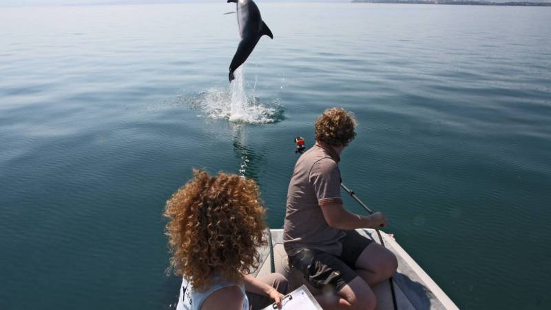 Video recording a bottlenose dolphins breaching