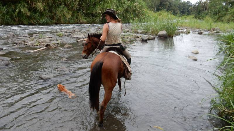 Natural Horsemanship Assistant