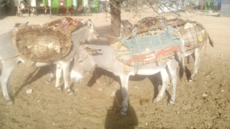 donkeys have come for market day