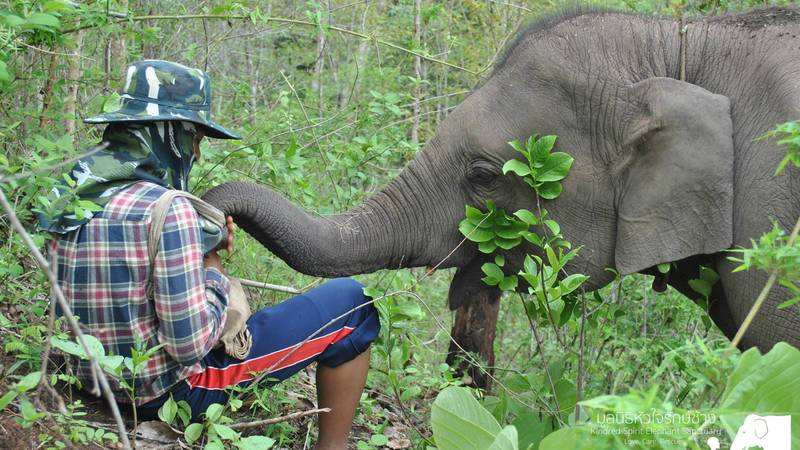 Elephant Sanctuary & Community Immersion