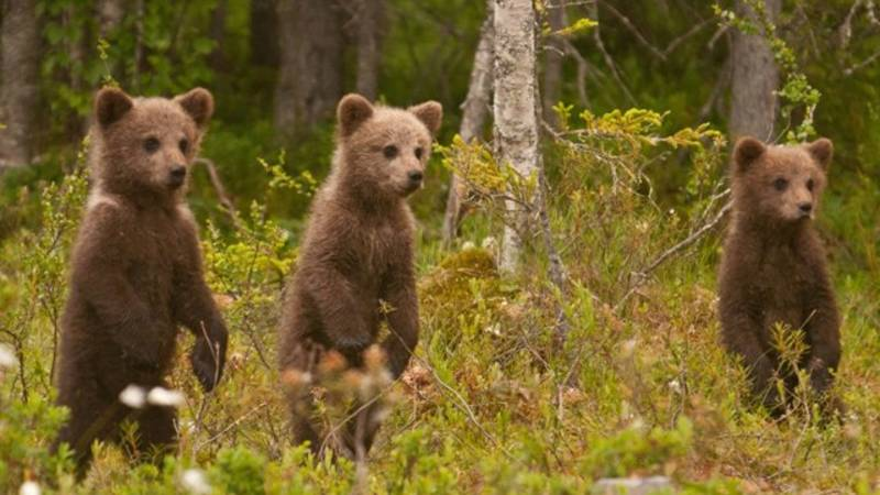 Nordic Wilderness Adventure