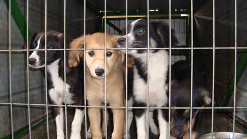 Help puppies