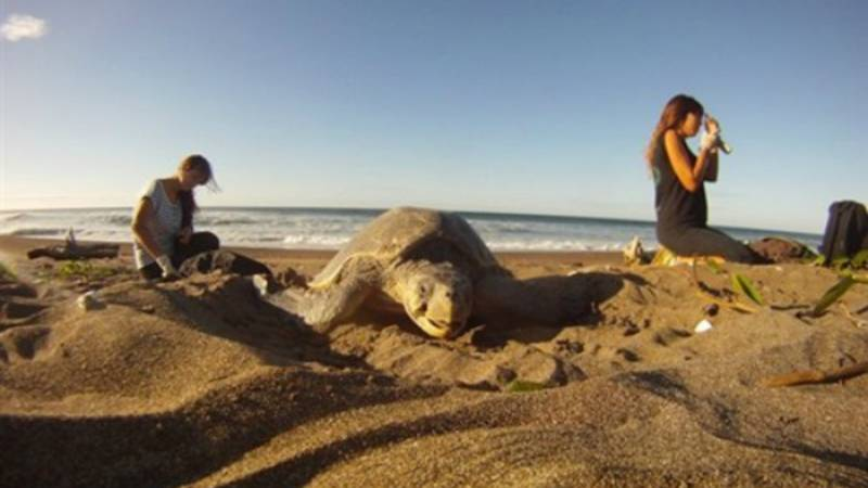 Support Sea Turtle Conservation