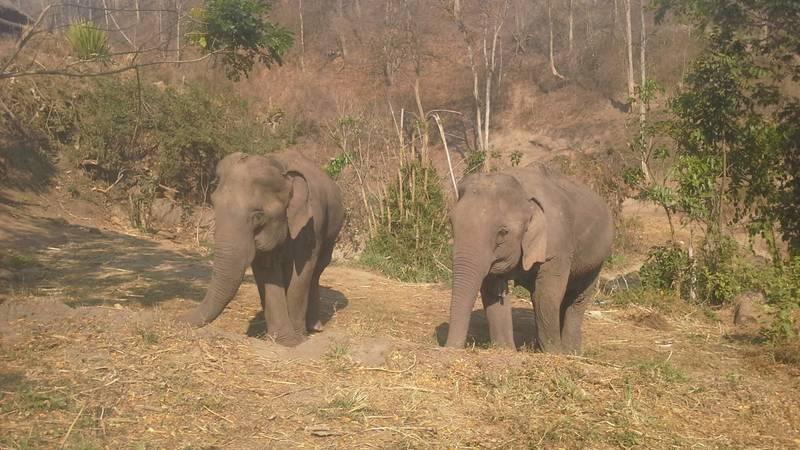 Elephant and Animal Volunteer