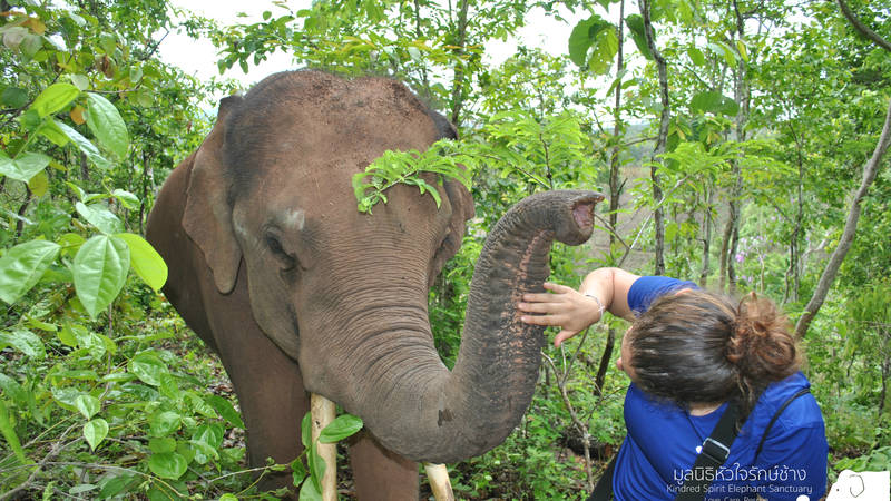 Join our elephant hikes in your freetime