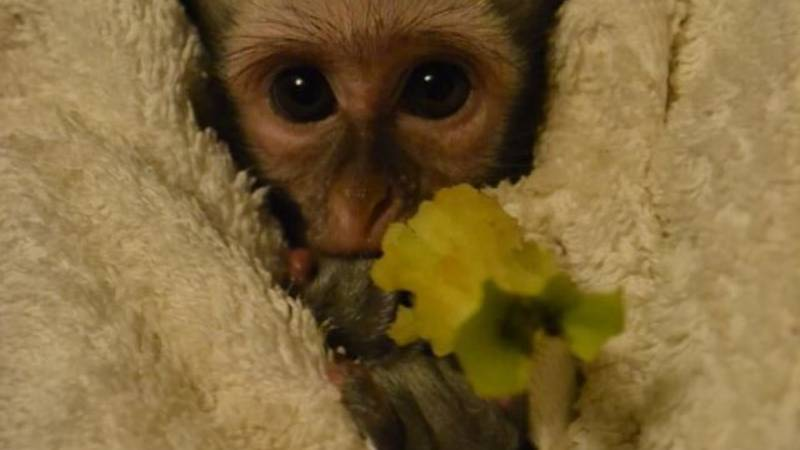 Centre for Orphaned and Injured Wildlife