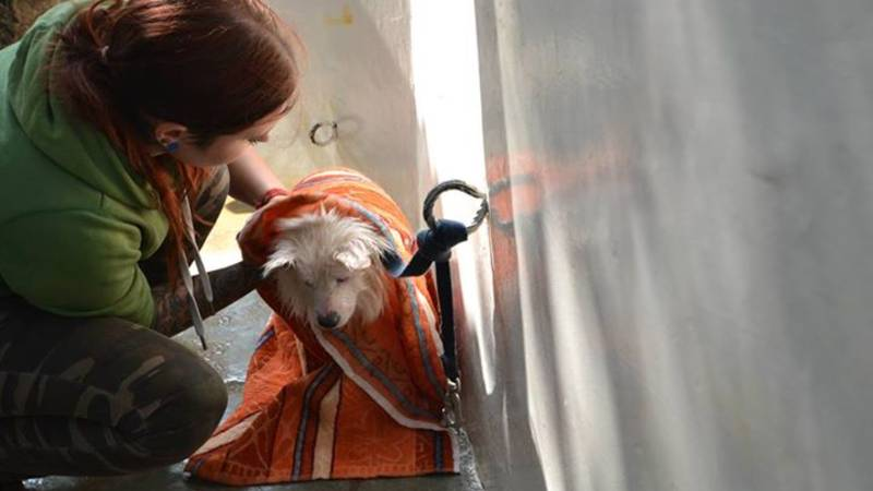 Animal Care and Rescue