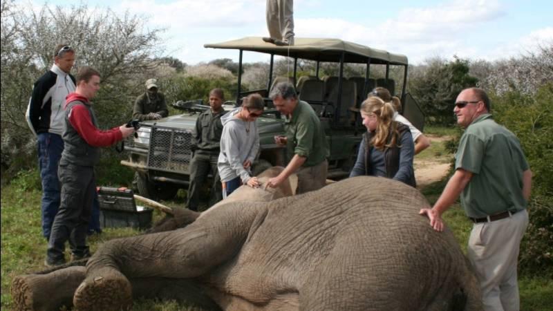 Wildlife Reserve Big Five Conservation