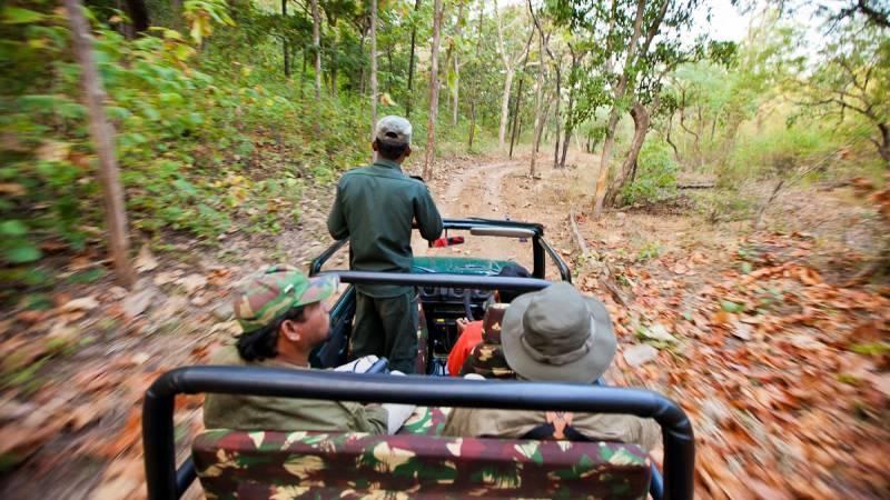 Indian Tiger Trails