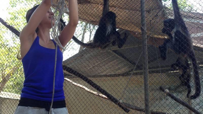enrichment for monkeys!