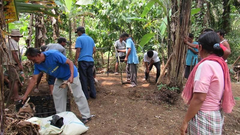 local people make seedling sugar palm