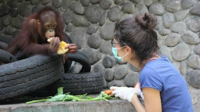 Orangutan and Wildlife Rescue Center
