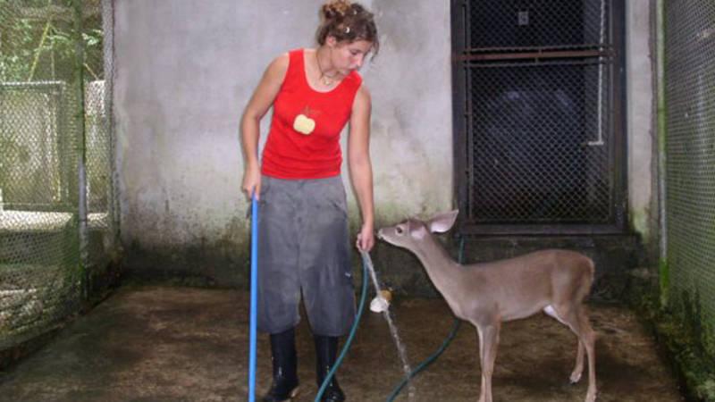 feed animals