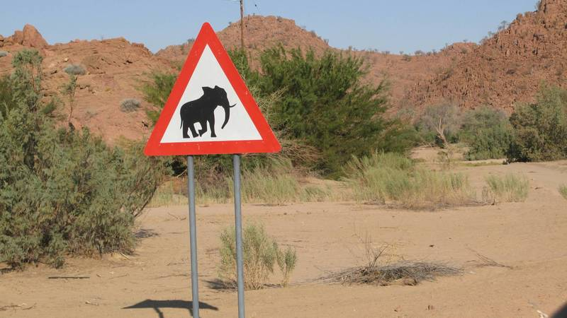 Elephant road sign!