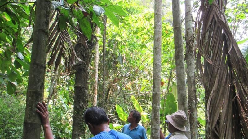area sugar palm plantation