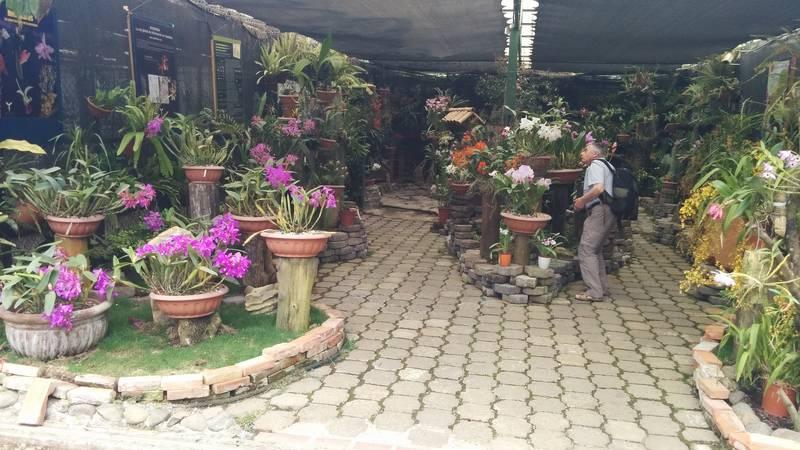 Botanical Gardener