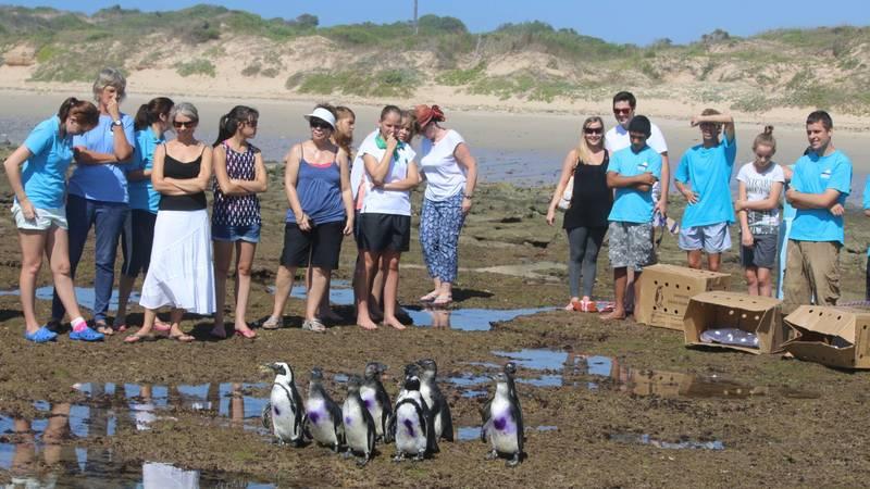 Releasing penguins