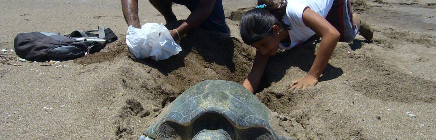 Buena Vista Sea Turtles