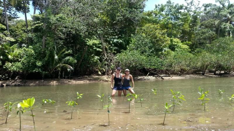 Mangrove planting in Costa Rica!