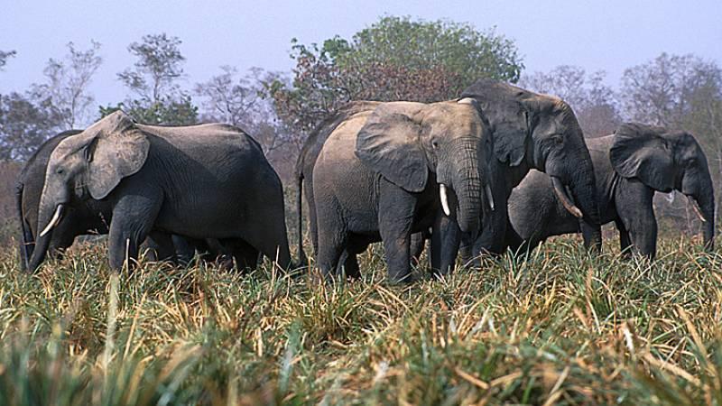 Ghana Wildlife
